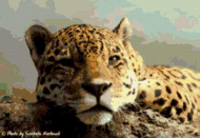 Ягуар, кошки