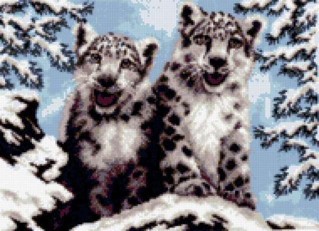 Снежные барсы, животные, кошки