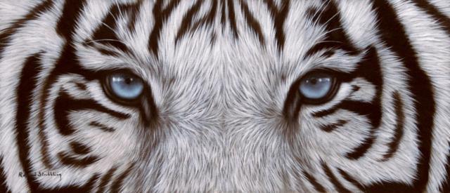 Схема вышивки «Глаза тигра»