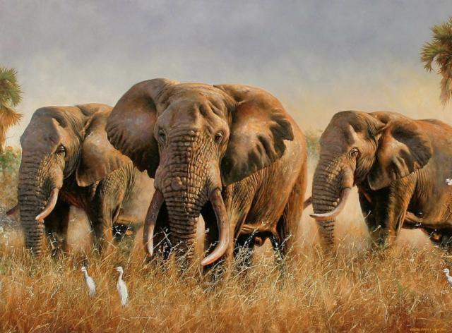 Животные саванны, слоны