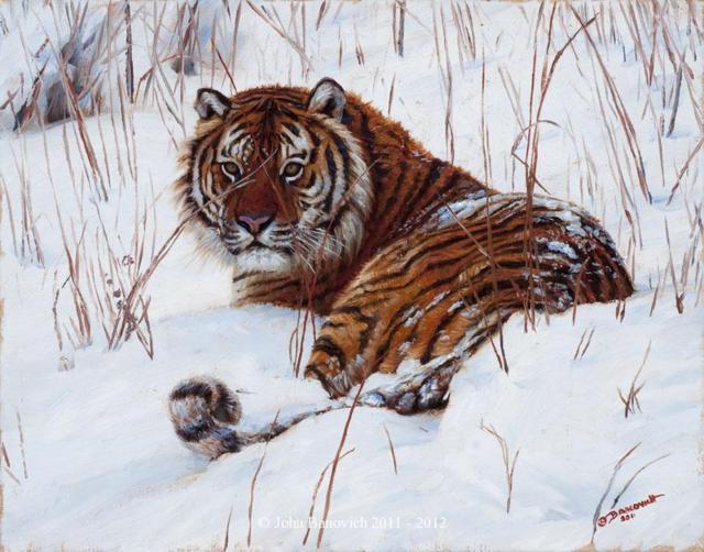 Сибирский тигр, картина, дикая