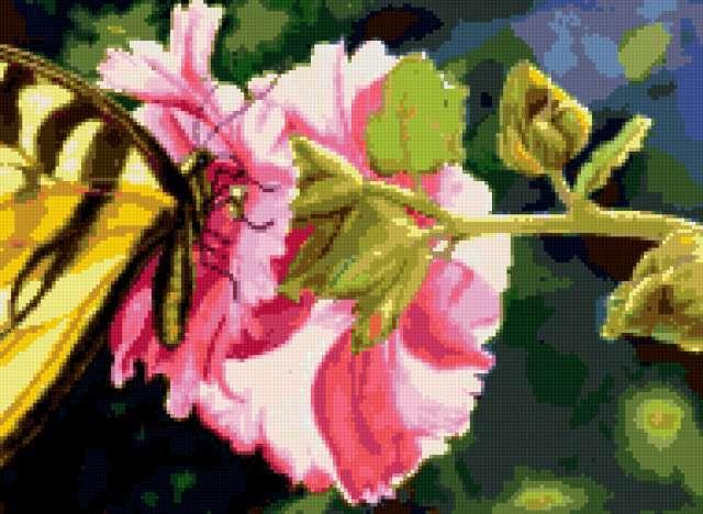 Бабочка на цветке мальвы,