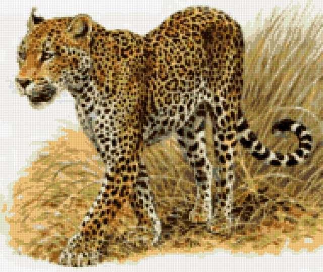 схема вышивки гепарды
