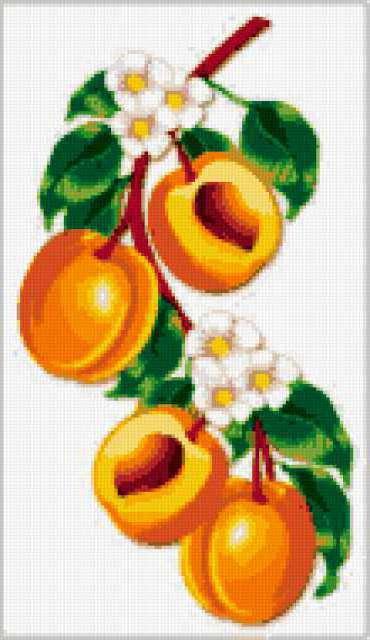 Схема вышивки абрикос