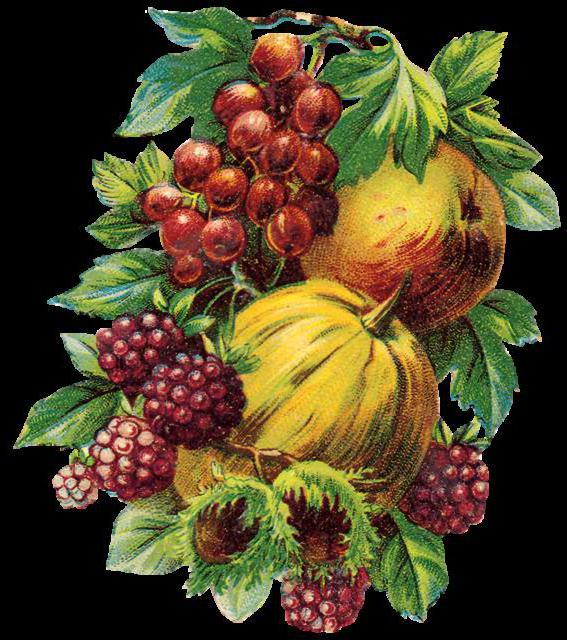 фрукты, овощи, орехи