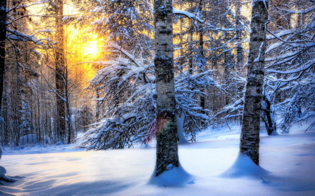 Зимний лес, зима, солнце