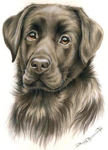 портрет собаки, оригинал