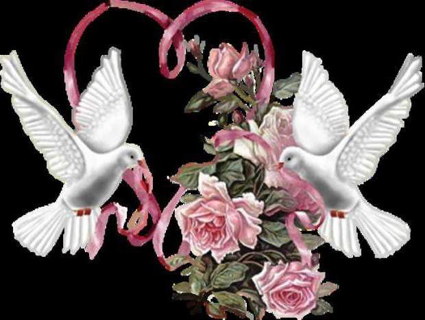Голуби, сердце, розы 2,