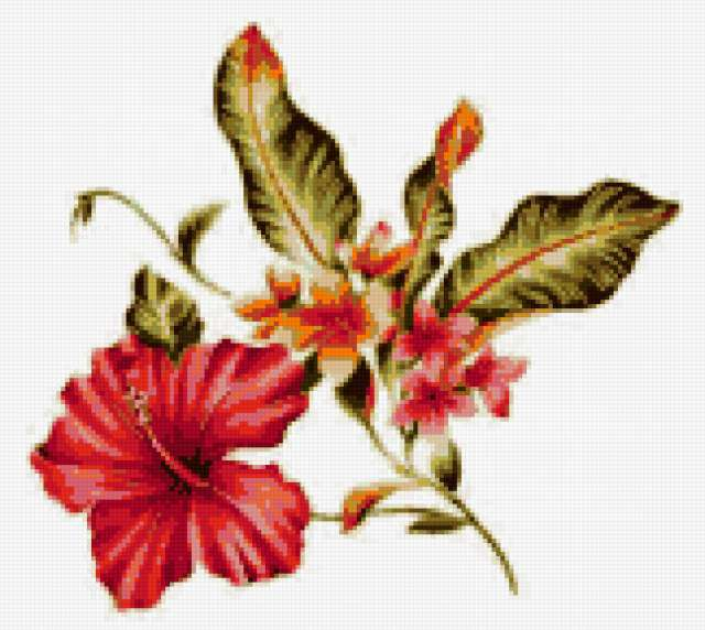 Гибискус, цветок, гибискус