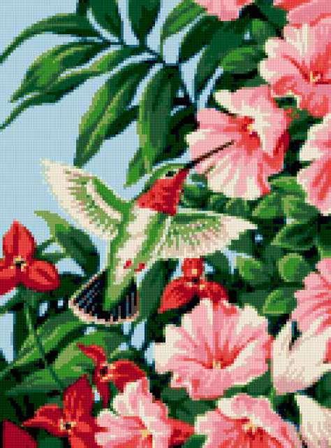 Колибри и гибискус, райские