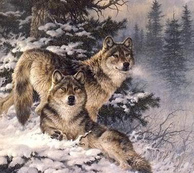 Вышивка поцелуй волка примета 5