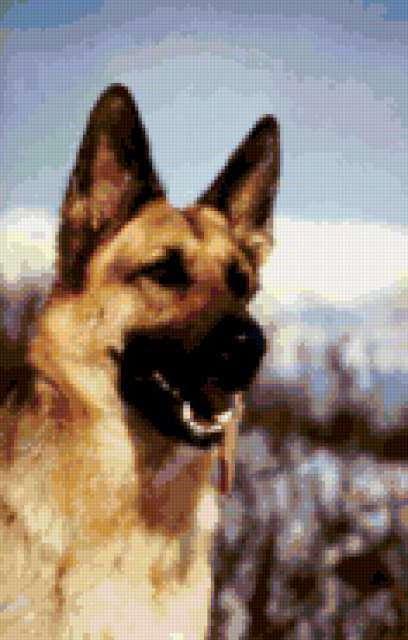 Немецкая овчарка, собаки