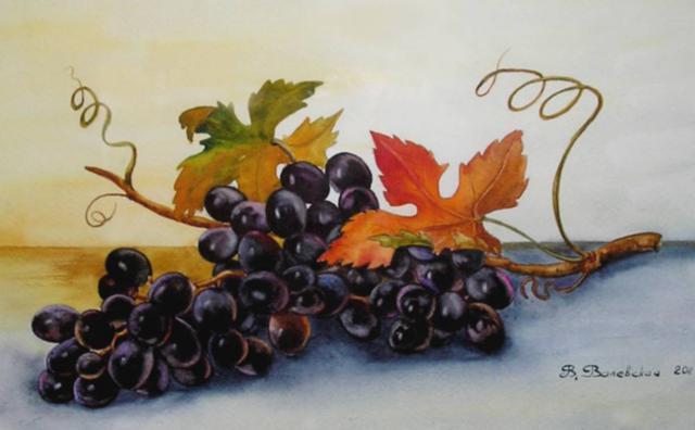 Виноград, виноградная лоза ,