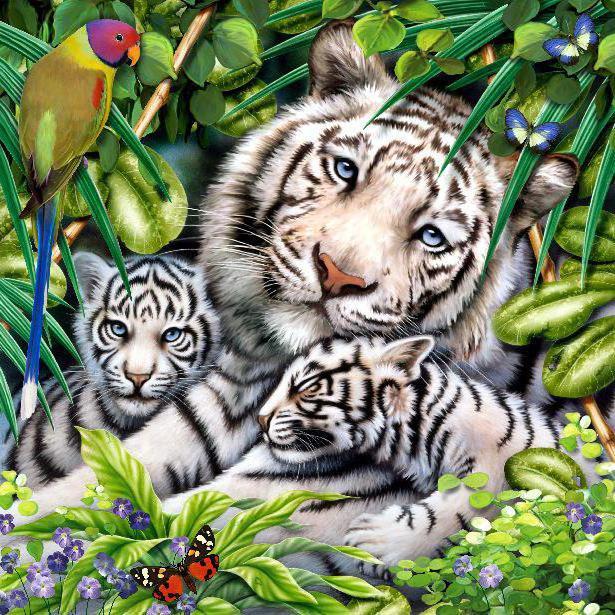 Белые тигры, хищник, дикая