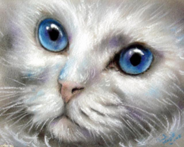 белая кошка, голубые глаза
