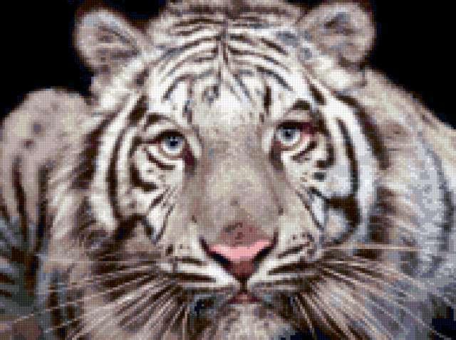 Бенгальский тигр, предпросмотр