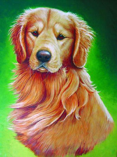 Портрет собаки, домашние
