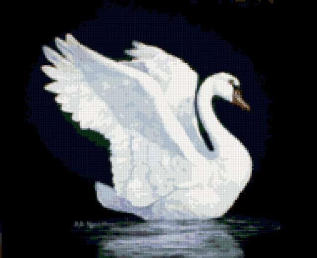 Белый лебедь на чёрном фоне,