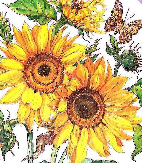Подсолнухи и бабочка, цветы и
