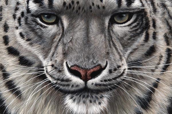 снежный леопард, барс