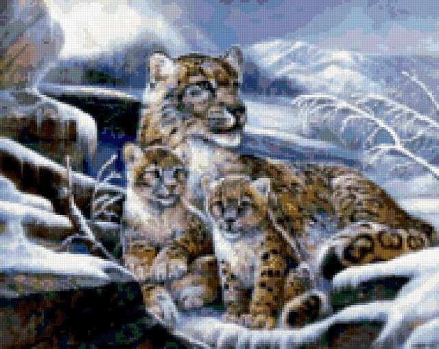 снежный леопард, барс,