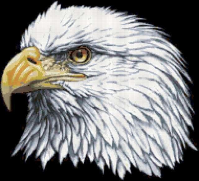 Голова орла, предпросмотр