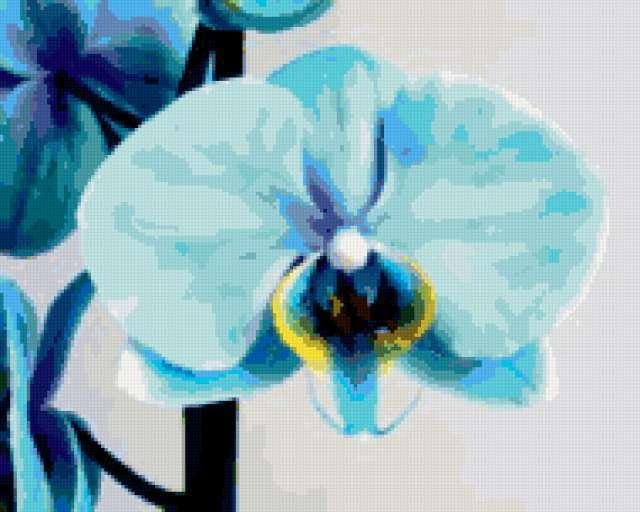 Красивейшая голубая орхидея)