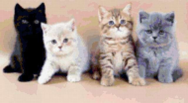 Кошачий квартет, предпросмотр