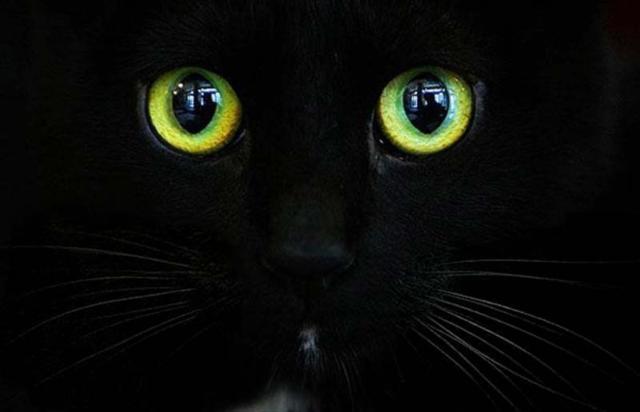 Глаза кошки, кошки, кошка,