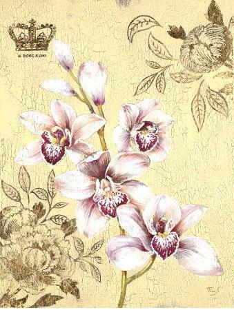 Орхидеи, орхидея, орхидеи