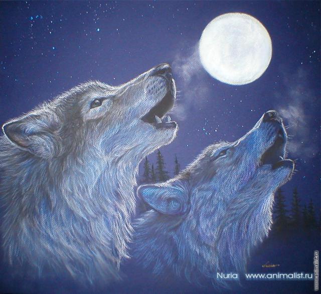"""Серия """"Волки"""", животные, волки"""