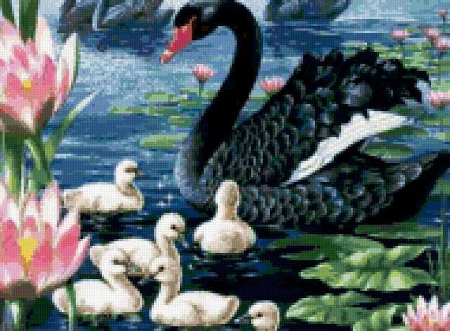 Чёрный лебедь, предпросмотр