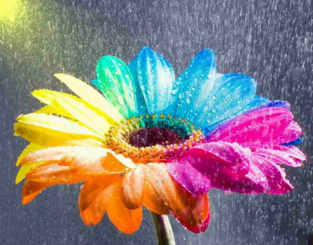 Необычный разноцветный