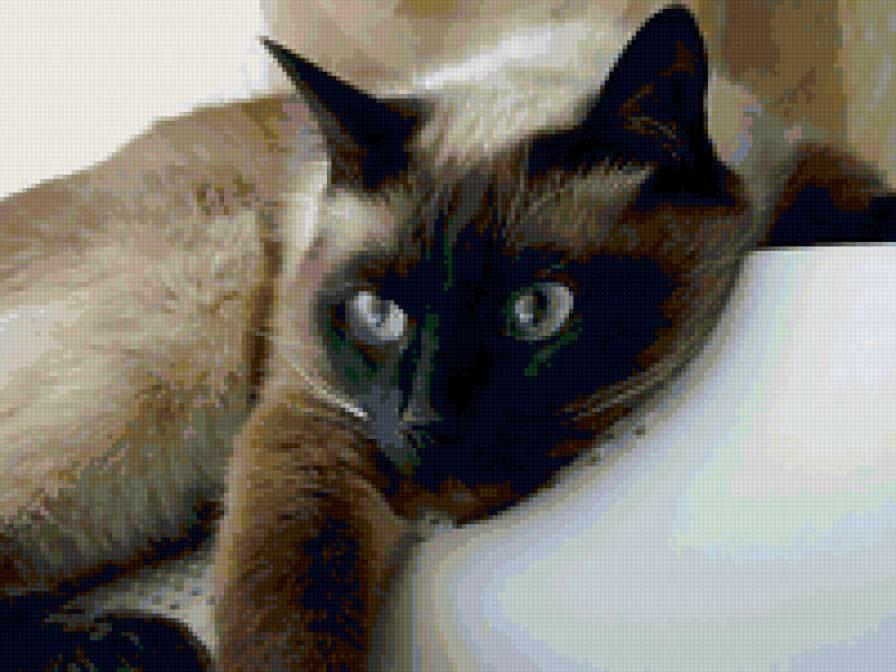 """Фото кошек - Картинки котят Слайдшоу  """"  """" Котята и кошки."""