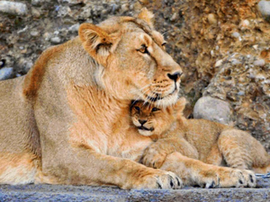 Львица и львенок, предпросмотр