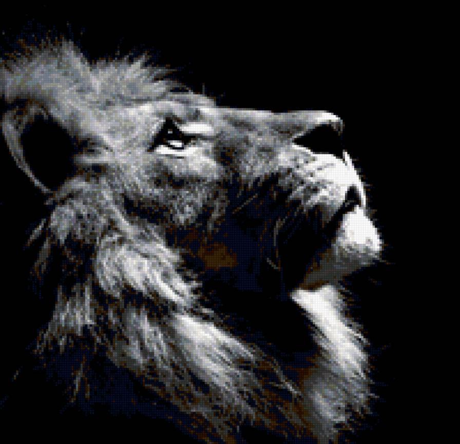 Царь зверей, предпросмотр