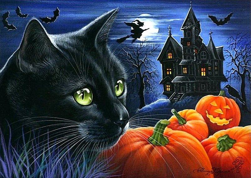 Мой любимый черный кот,