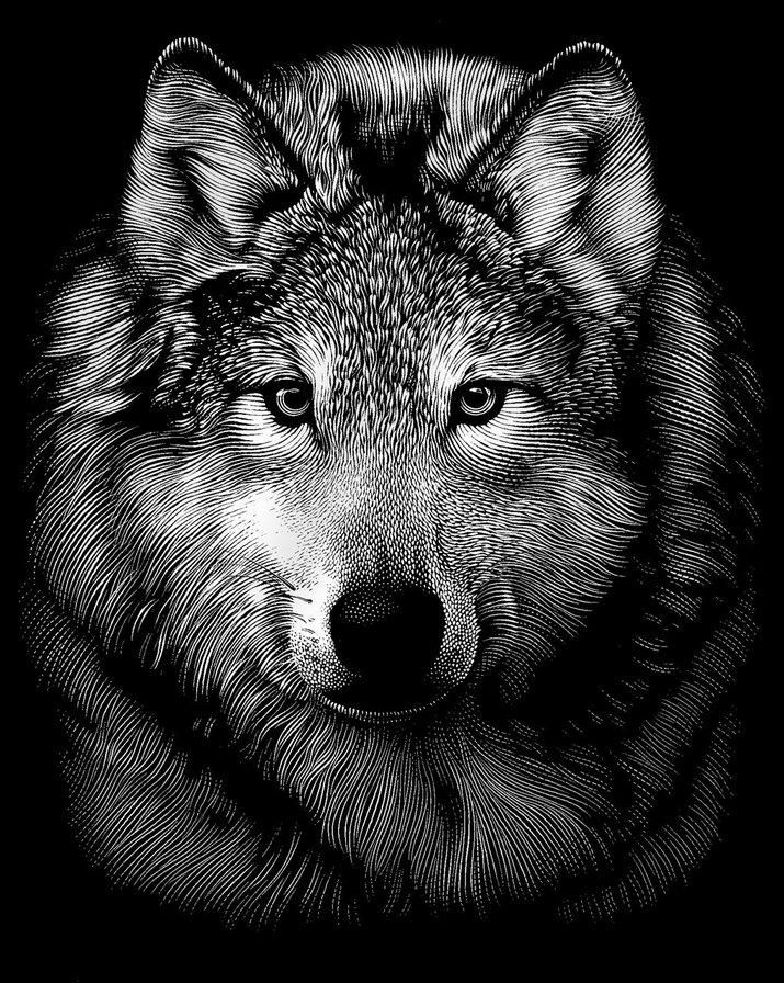 волк, хищник, волк, волки,