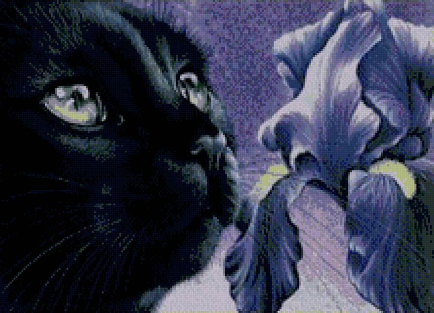 черный кот и ирис.,