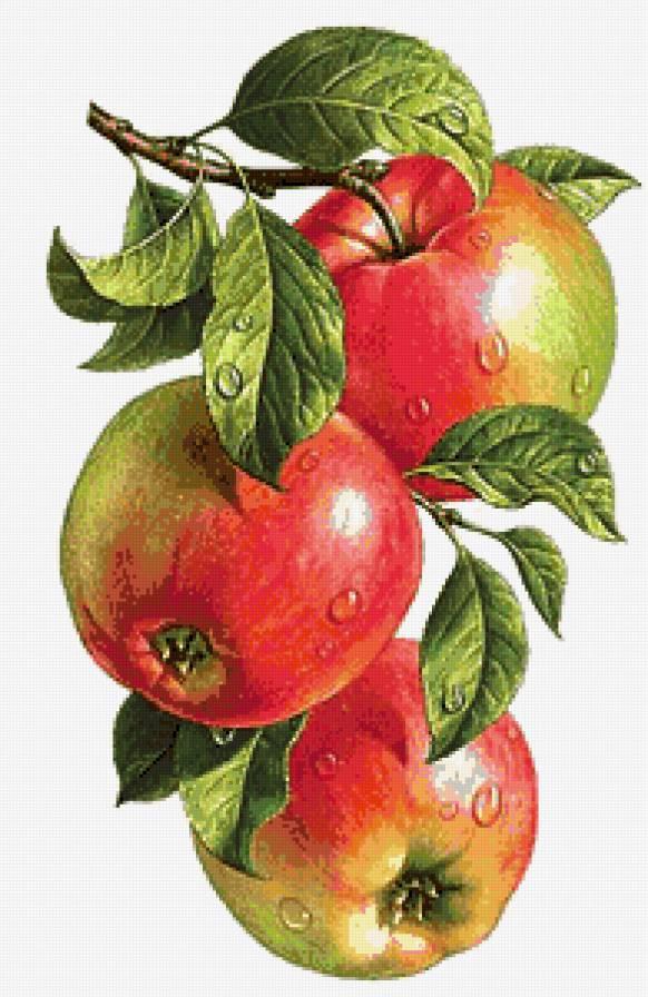 Наливные яблочки, предпросмотр