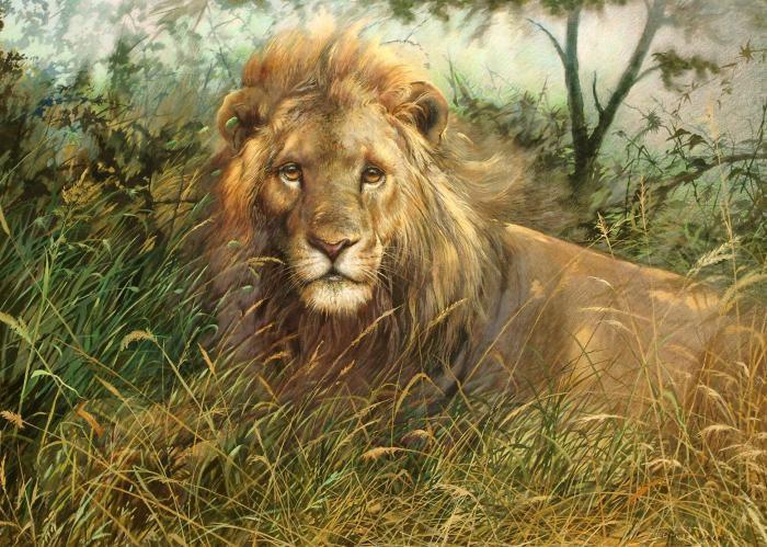 Лев, картины, животные