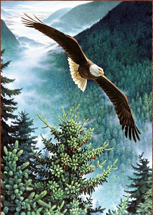 Полёт орла, оригинал