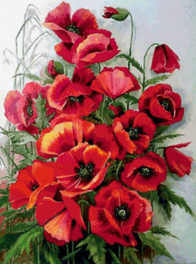 красные маки, красные цветы,